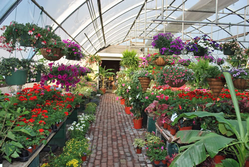 Greenhouse Nursery